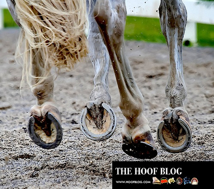 Sue Dyson: How Poor Performance and Pain Are Linked in Equestrian Sports | Equestrian | Scoop.it