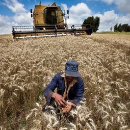 Agritech firm promising growth in crop yields | Large Scale Farming | Scoop.it