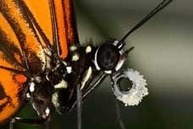 Colorful butterflies increase their odds of survival by sharing traits | Gardening Life | Scoop.it