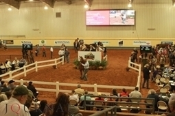 AQHA: How Is the Market | How to Market Your Small Business | Scoop.it