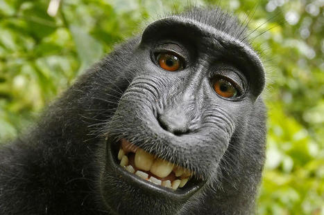 Can a monkey copyright a selfie?   Information Science   Scoop.it