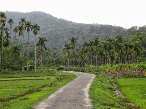 Kerala Tour Packages, Best Kerala holiday Deals - Travelholi | Kerala the exotic trip God's own Country | Scoop.it