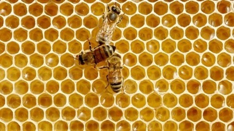 Australian honey could be making us sick | Cancer - Advances, Knowledge, Integrative & Holistic Treatments | Scoop.it