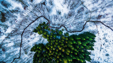 These Are the Top Drone Photos in the World | MishMash | Scoop.it