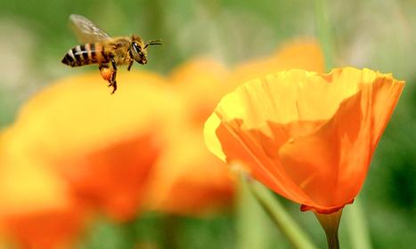 Pesticide Companies Sue EU Commission for Protecting Pollinators | L'isola del Bio | Scoop.it