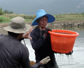 Thai shrimp industry shows evidence of gradual boost - FIS   Hassan   Scoop.it