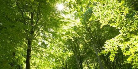 La fiscalité des forêts est préservée mais davantage contrôlée | anoribois | Scoop.it