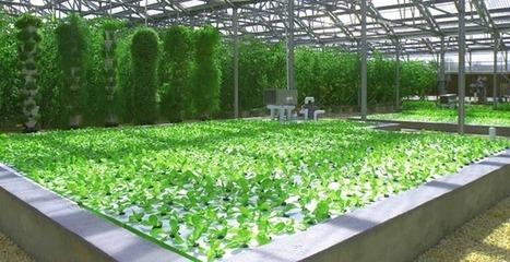 Hydroponic Farm|CuisinArt Golf Resort & Spa | Vertical Farm - Food Factory | Scoop.it