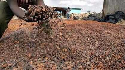 Les cours du cacao dégringolent | Banania Split | Scoop.it