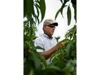 April frosts damage crops | Shelby Star | North Carolina Agriculture | Scoop.it