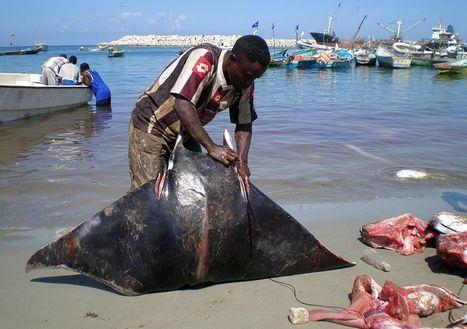 La pêche, une industrie florissante en Somalie - Francetv info | droit de la mer | Scoop.it