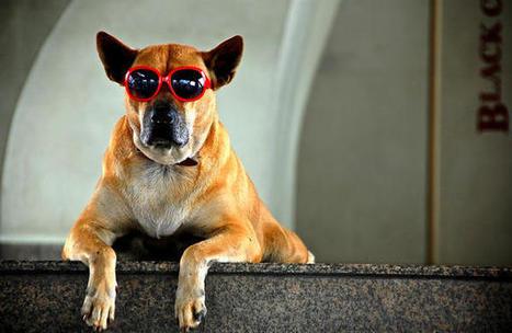 ¿Quieres clonar a tu perro? | CMC_VivirmasVivirmejor | Scoop.it