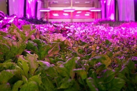 GalesburgPlanet.com - Aquaponics could be coming to Galesburg | Vertical Farm - Food Factory | Scoop.it