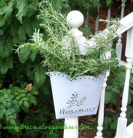There's rosemary that's for remembrance   Grown Green Gardens   Scoop.it