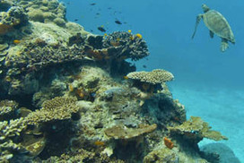 Great Barrier Reef on brink of devastation in relentless quest for coal | Geography | Scoop.it