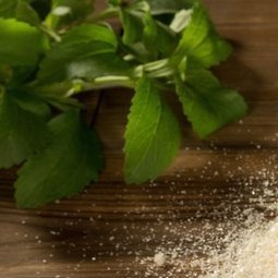 La Stevia : une alternative naturelle au sucre | e-santé et technologies | Scoop.it