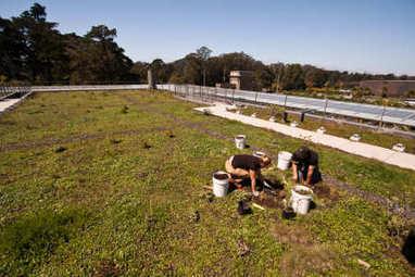 Paris fait le pari de la toiture végétalisée d'ici 2020 - FRANCE BTP   Bio alimentation   Scoop.it
