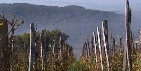 Dans le Nord Isère, des vignerons de Seyssuel ont redonné vie à un vignoble antique | Le Vin et + encore | Scoop.it