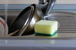 Kitchen sponge, not toilet seat dirtiest item in your house | Indian Express | CALS in the News | Scoop.it