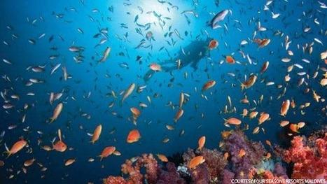 Scuba Diving in the Maldives | Scuba world | Scoop.it