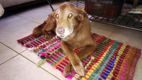 An Open Letter to the Jerk Who Abandoned this Dog… | Scandalous Facts | Scoop.it