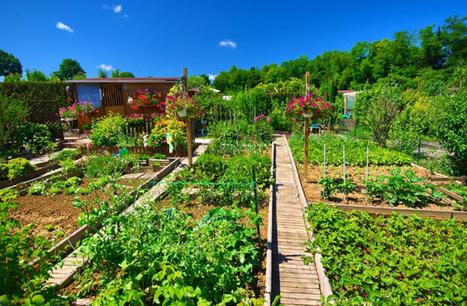 Une découverte israélienne va révolutionner l'agriculture mondiale | Questions de développement ... | Scoop.it