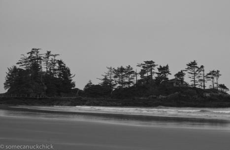Wind Blown Trees | Flickr - Photo Sharing! | flowers | Scoop.it
