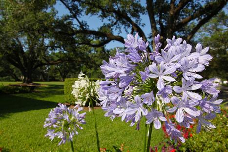 Oak Alley Plantation, gardens | Oak Alley Plantation: Things to see! | Scoop.it