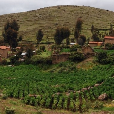 Complementary potato conservation in the Parque de la Papa | Agricultural Biodiversity | Scoop.it