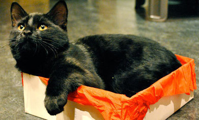 Why Cats Love Boxes | feline facts | Scoop.it