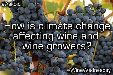 Ask Sid: How is climate change affecting wine and wine growers?   All Things Wine and Food!   Scoop.it