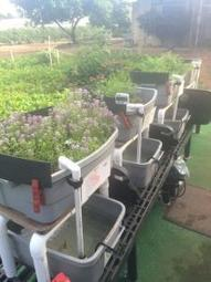 Center on Disability Studies partners to expand aquaponics career skills | Aquaponics in Action | Scoop.it