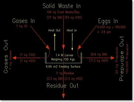 Bioconversion of Food Waste: Black Soldier Fly | Food LCA | Scoop.it