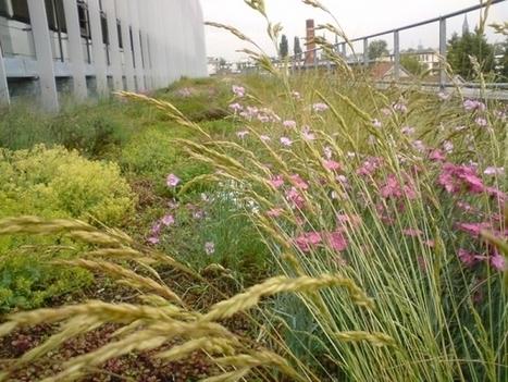 Toiture végétalisée : un travail de professionnel pour des toits beaux et écolos   Jardins urbains   Scoop.it
