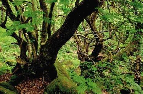 More ancient woods will be lost to HS2, Natural England admits - Horticulture Week | AP HUMAN GEOGRAPHY DIGITAL  STUDY: MIKE BUSARELLO | Scoop.it