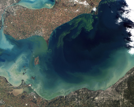 Incredible Images of Algal Blooms Taken From Space - Wired | cyanobacteria | Scoop.it