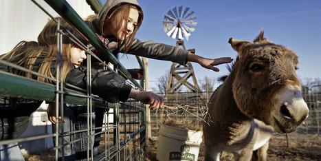 The Unusual Curriculum Transforming This Kansas School | Food issues | Scoop.it