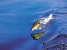 Οικοτουρισμός στην Αίγινα: Τα 9 κριτήρια του Οικοτουρισμού !   ecotourism   Scoop.it