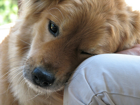 A Lesson in Empathy … from Dogs   Psychology Professionals   Scoop.it