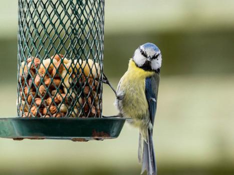 Des abris pour les petits animaux - L'Orne hebdo | biodiversité - ornithologie - biologie de la conservation | Scoop.it