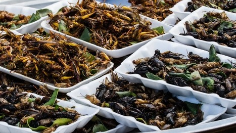 Crickets hit the plates as the latest Silicon Valley snacking trend | Entomophagy: Edible Insects and the Future of Food | Scoop.it