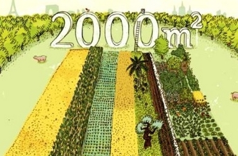 Projet 2 000 m2 : prouver que l'on peut nourrir le Monde dans le respect de l'environnement | Innovation sociale | Scoop.it