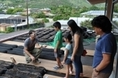 2014 - The Roof's the Limit | Sustainable Urban Agriculture | Scoop.it