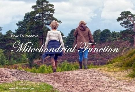 How To Improve Mitochondrial Function » | Fibromyalgia | Scoop.it