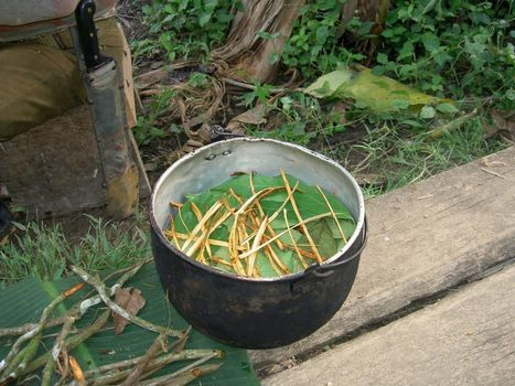 One Hundred Academics for Ayahuasca Dignity in Colombia | Ayahuasca  アヤワスカ | Scoop.it