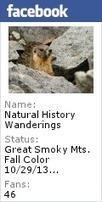 Overhunting Large Animals Devastates Trees | GarryRogers NatCon News | Scoop.it