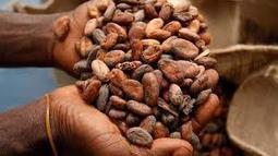 Marché mondial des produits alimentaires : Le cacao au plus haut depuis 5 mois Agriculture | Banania Split | Scoop.it