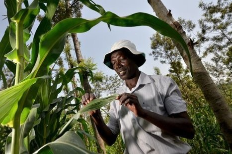 Overcoming institutional and policy barriers to climate-smart agriculture CCAFS: CGIAR research program on Climate Change, Agriculture and Food Security | Climate Smart Agriculture | Scoop.it