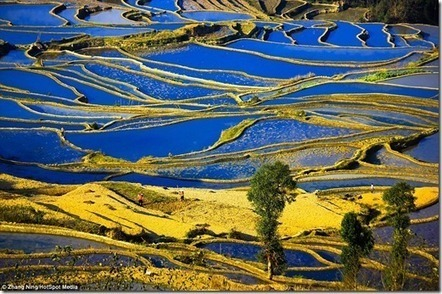 The Amazing Landscapes of Rice Field Terrace by Zhang Ning | Source of your inspirations | Scoop.it