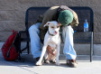 Can Puppies Help Homelessness? | READ WHAT I READ | Scoop.it